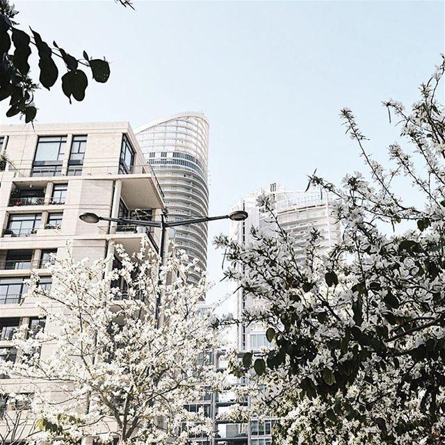 Spring air. ... (Beirut, Lebanon)