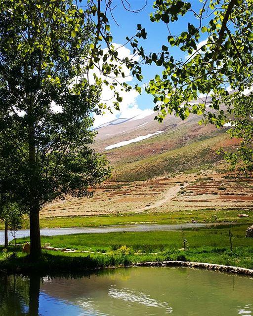 "quoteofthedayIn An oasis far far away, philosophyoftheday "" The tree..."
