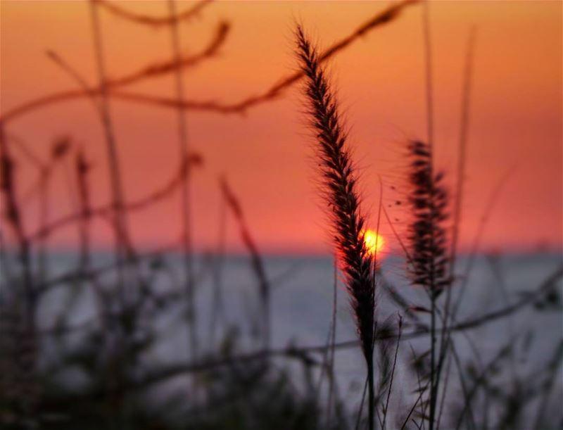 nikontop_ nikonworld bns_sky bns_sunset naturelovers unlimitedsunset... (Damour, Lebanon)