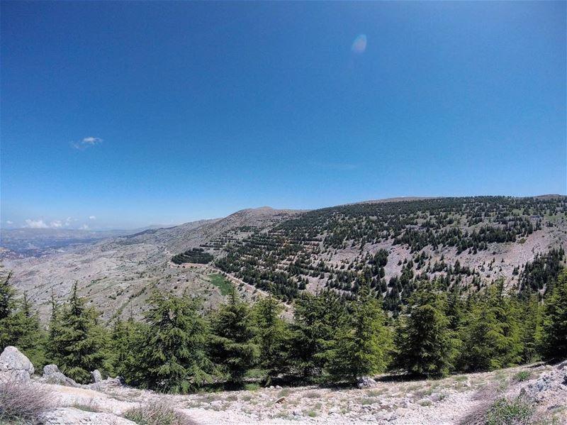 a l s h o u f ..c e d a r s ..r e s e r v e .. lebanon lebanon_hdr ... (Al Shouf Cedar Nature Reserve)