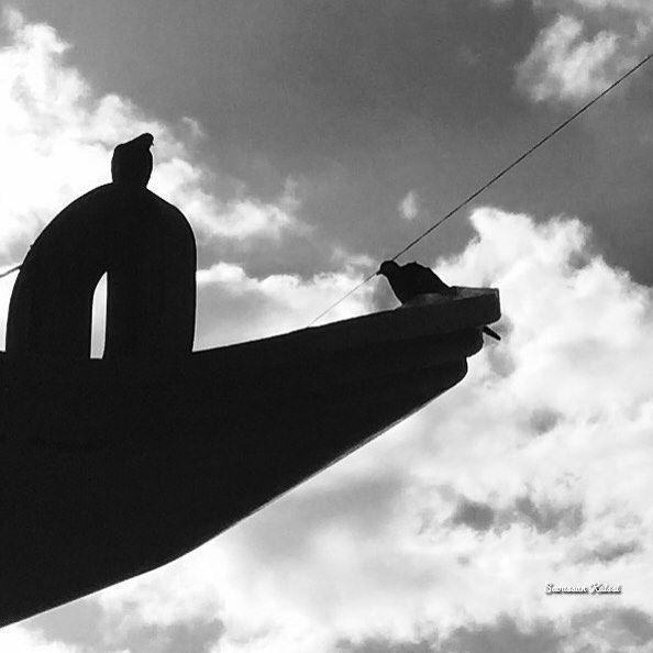 blackandwhite monochrome freedom pigeons sky saida ...
