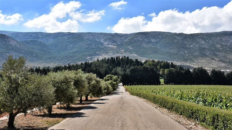 The Road of the Manor----------------------------- nature  mountains ... (Chateau Kefraya)