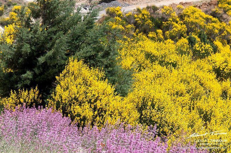 Si chaque homme chaque jour jetait une fleur sur le chemin de son prochain, (Zahlé, Lebanon)