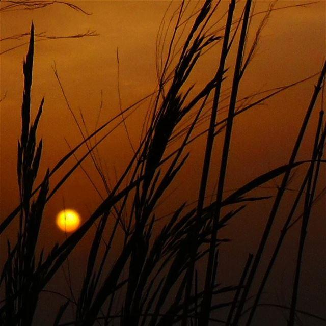 nikontop_ nikonworld bns_sky bns_sunset naturelovers unlimitedsunset... (Baakline, Mont-Liban, Lebanon)
