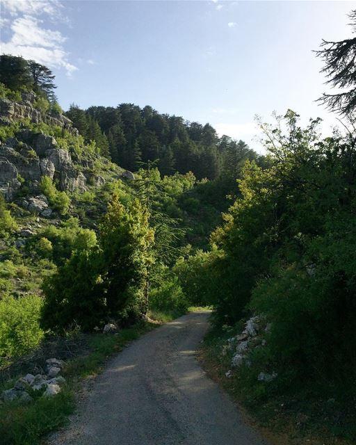 Take me where nature is untouched 🌿🌲🍃 a7labaladbil3alam photo love ... (Arz Tannoûrîne)