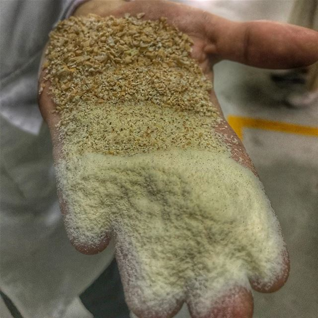 The different stages of milling; a wheat grain goes through to deliver... (Crown Flour Mills)