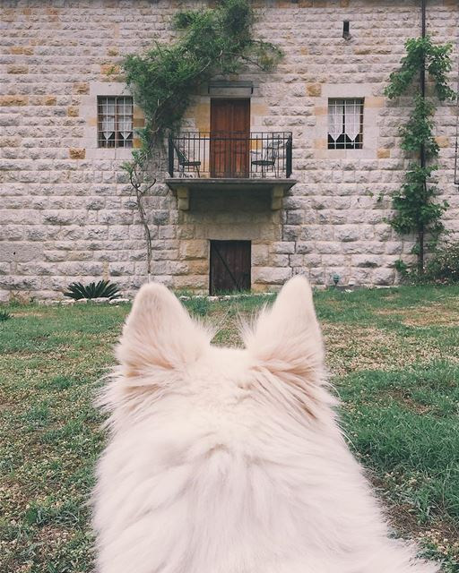 Guardian of the house- lebanon  aramoun  keserwan  old  house  dog ... (Aramoun, Mont-Liban, Lebanon)