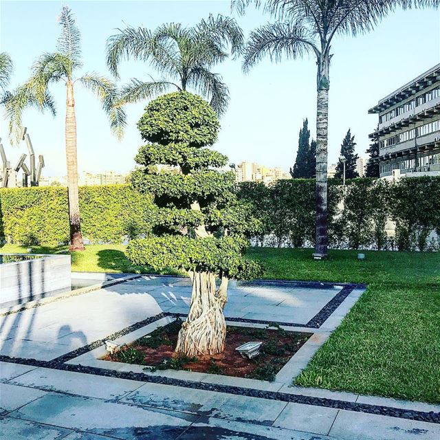 Good morning 🌳🍀📷☕️ garden tree nature naturephotography weather ...