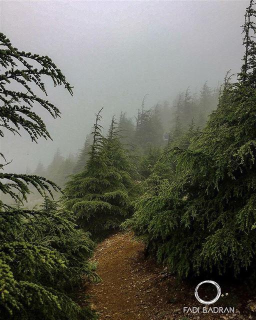 Cedars..... lebanon beirut vscocam beautifuldestinations ... (Falougha, Mont-Liban, Lebanon)
