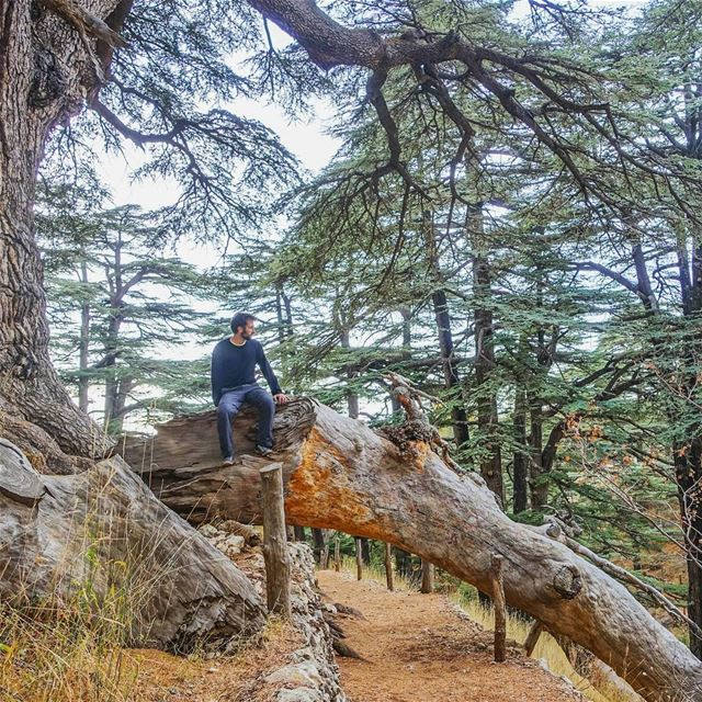 Where are you in the Cedars of Lebanon? throwback lebanon ... (Cedars of God)