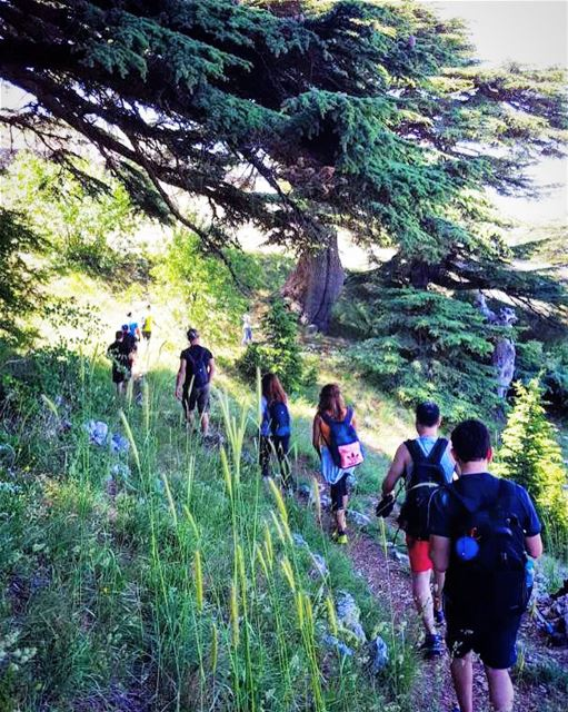 Hiking with SaneLebanon is the answer.....🔑 who cares what's the... (Al Shouf Cedar Nature Reserve)