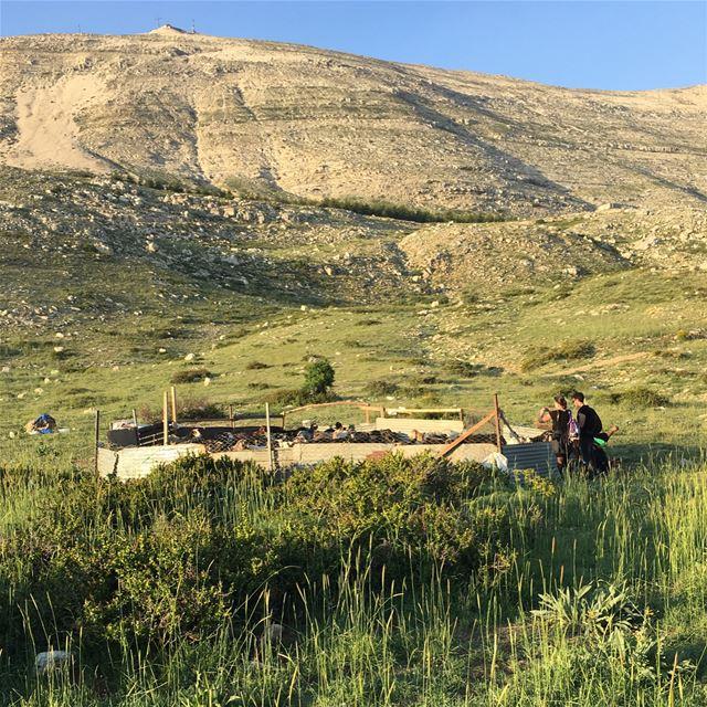 Sannine Foothill sannine mountsannine kesrouan mountlebanon goats ... (Sannin, Mont-Liban, Lebanon)