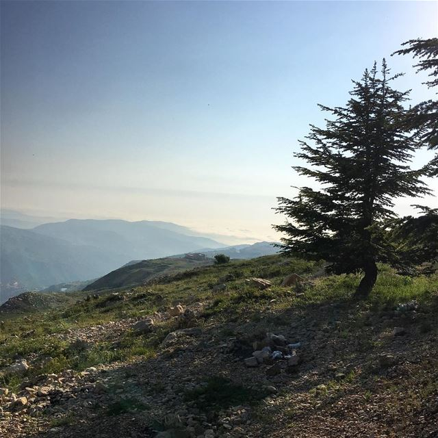 Beirut Under the Clouds.. cedars bakish cedarsoflebanon kesrouan ... (Qanat Bakish, Mont-Liban, Lebanon)