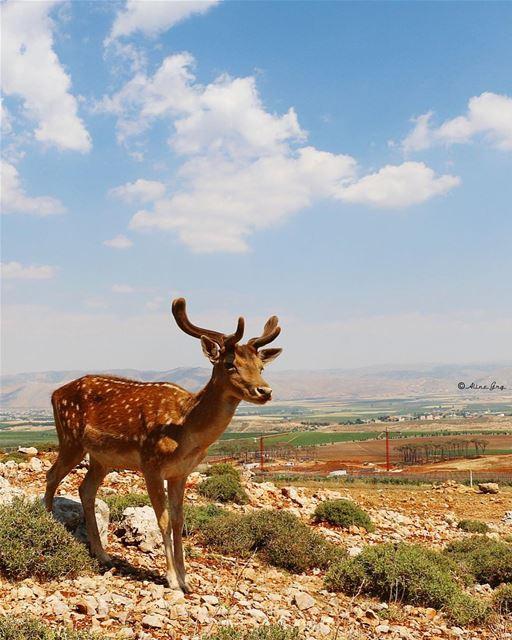 🦌 bekaa aana westbekaa deer view bekaavalley clouds bluesky sky ... (Aâna, Béqaa, Lebanon)