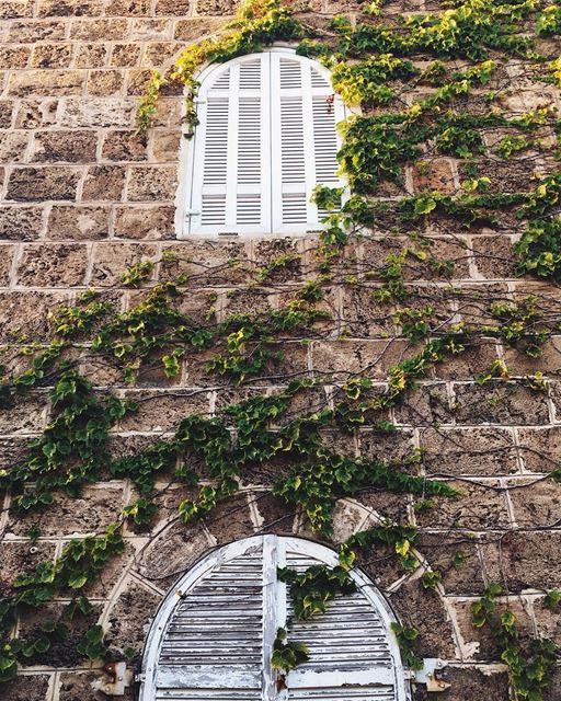 L 💚 V E sunday green instamood instagood byblos lebanon ... (Byblos - Jbeil)