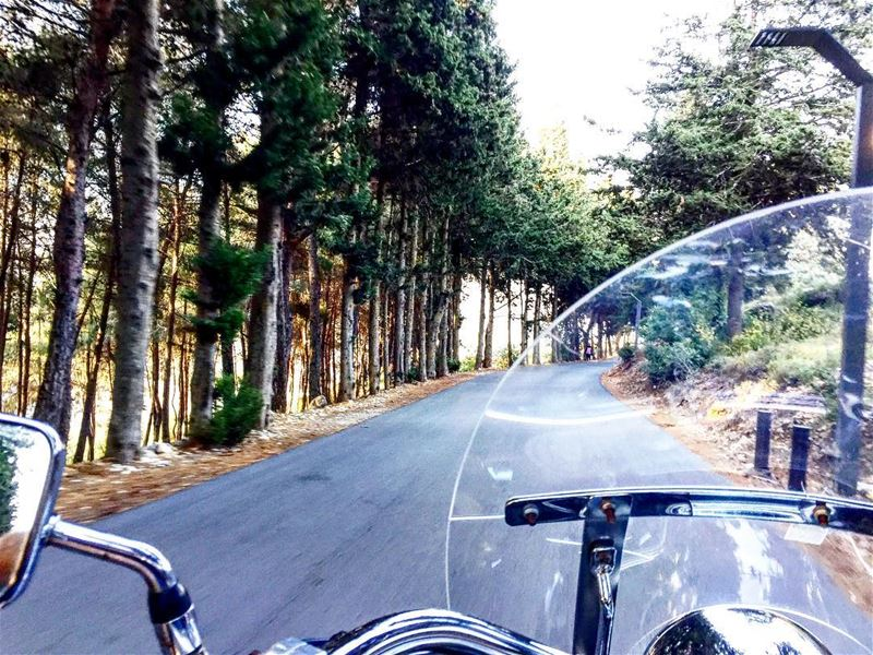For the love of the ride ! TebnineForest--------------------------------- (حرش تبنين)