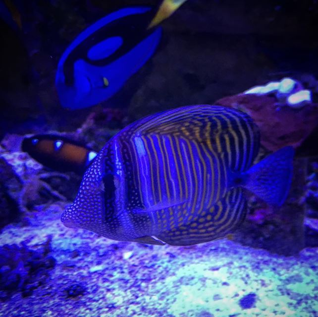 underworld seaworld fish amazing lebanon photograghy picoftheday ...