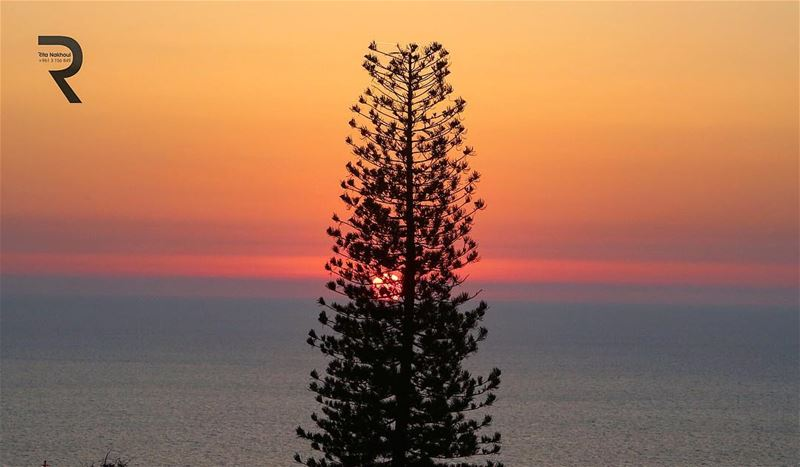 ....sunset behind the tree... 🌅  WorldCaptures  BeautifulDestinations ...