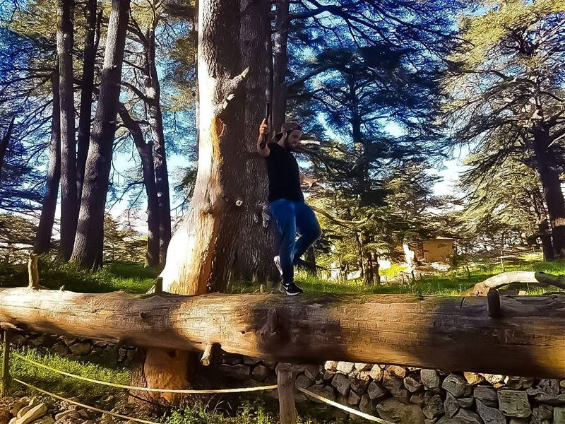 Extremes are easy. Strive for balance. 📷 @moris1920 balance balanced ... (The Cedars of Lebanon)