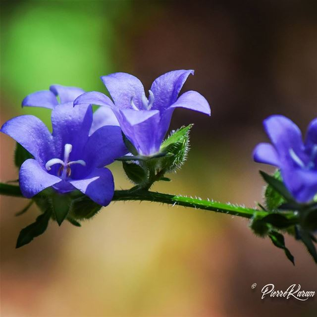 beauty in the wildness ... naturephotography nature flower ...