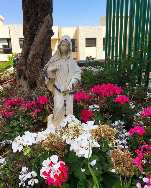 Surrounded by beauty 🙏🏻🌸😇-- peace beirut lebanon tuesday instagram... (Beirut, Lebanon)