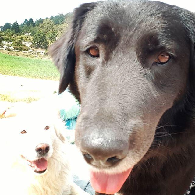 Dog's selfie ! tourleb tourlebanon akkar lebanese lebanon ... (`Akkar, Liban-Nord, Lebanon)