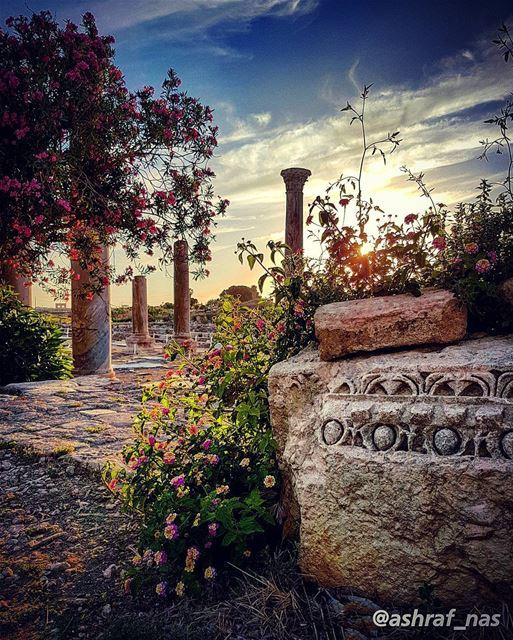 حفرتُ أُحبّكِ فوق عقيق السَحَرْحفرتُ حدودَ السماءِ حفرتُ القَدَرْ...ألم ت (Roman ruins in Tyre)