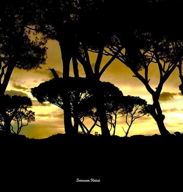 sunset colors pinestrees deirelmoukhalles el chouf lebanon ...