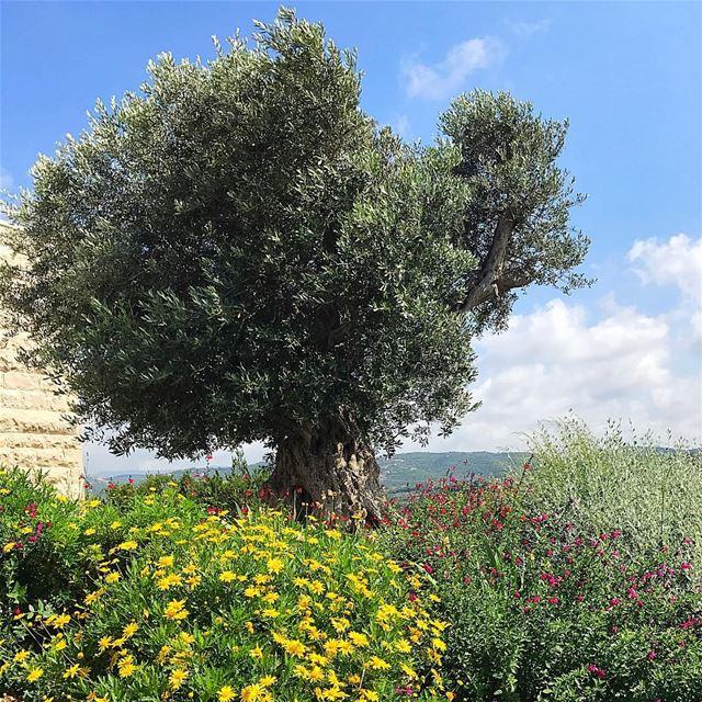 U. R the wind to my tree❤️ insta_lebanon ptk_lebanon lebanoninapicture ...