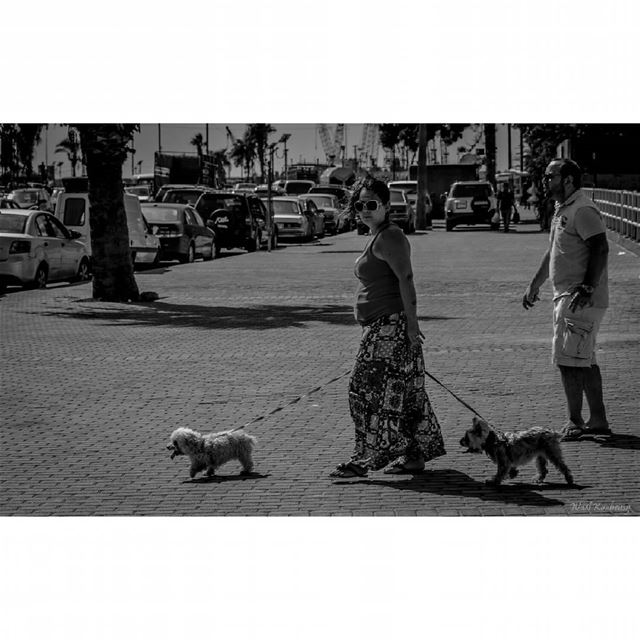 bnw  woman  dogs  walking  blackandwhite  street  cars  corniche ...