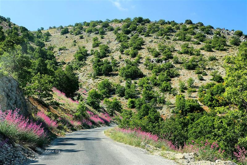 تعا نمشي هالدرب سوا .. 🌺 shoufbiospherereserve flower road mountain ... (Shouf Biosphere Reserve)