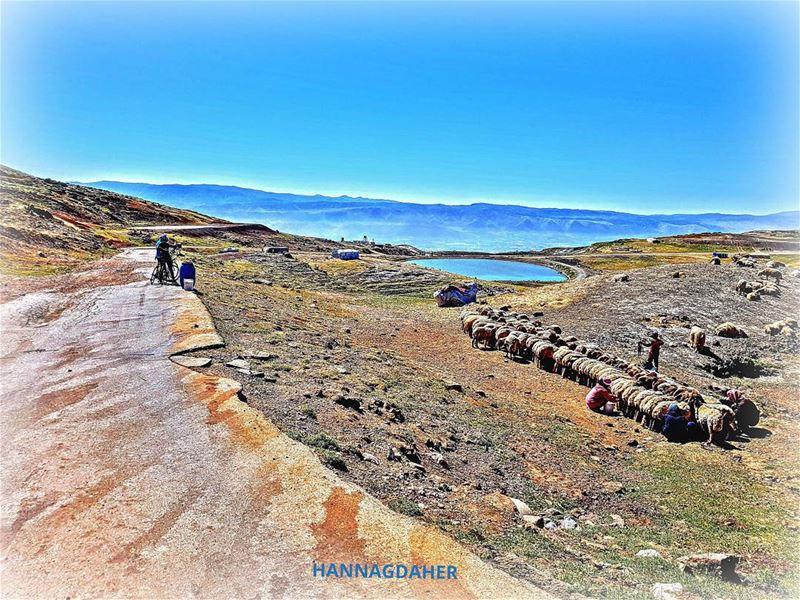 cyclinglife cycling cyclingday crazycompany mountains sannine ... (Sannin, Mont-Liban, Lebanon)