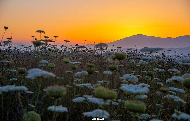 💛 sunrise landscape beautiful nikon d810 instagram nature ... (Khirbet Selm)