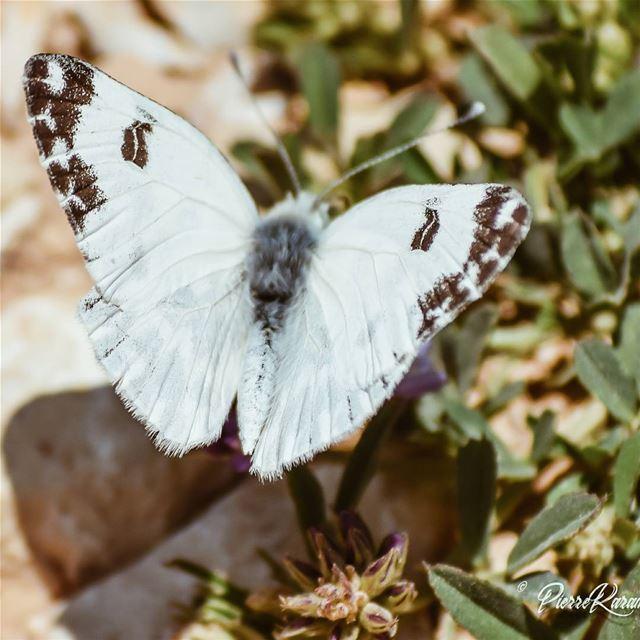 Butterfly season.. worldtravelbook passionpassport visualsoflife ...