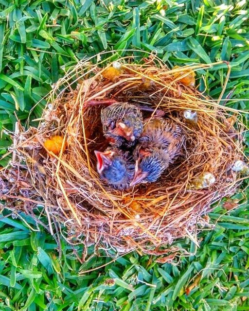 Hello babies 🐣....... nature_shooters naturephotography ...