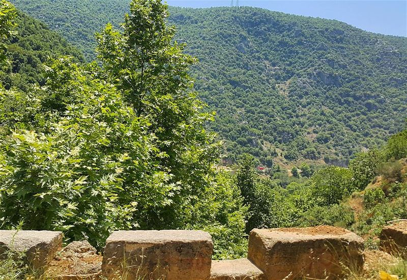 Good morning from Wadi El Salib lebanon  wadisalib  nature  summer ...
