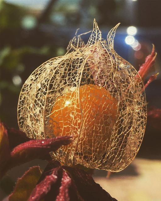 🌾🍂🌼.... nature love fruits lantern insta_jezzine ...