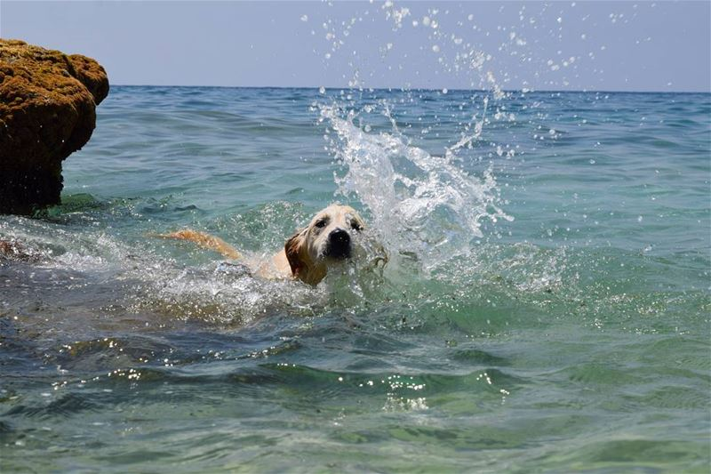 dog sea liveloveanimals livelovedogs blue lebanon animals summer ...