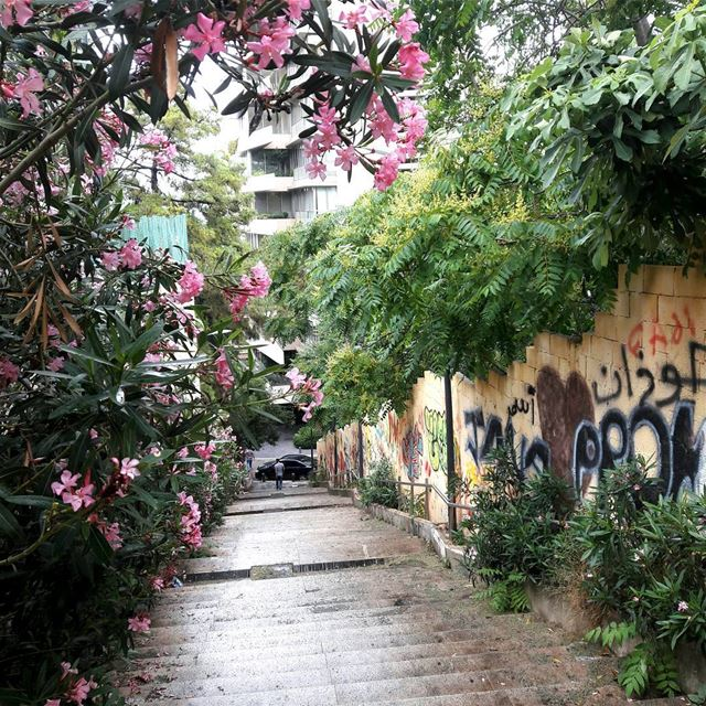 tb stairs hamra colors Beautiful flowers green beirut ... (Hamra, Beyrouth, Lebanon)