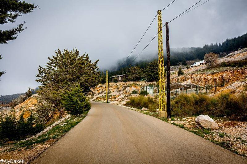 Watching the clouds pass by 🙄 Lebanon livelovelebanon photography ... (Al Shouf Cedar Nature Reserve)