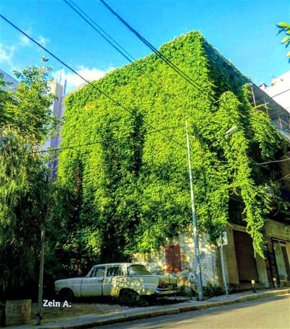 gogreen green old building bluesky daylight streetphotography ... (Tabaris)