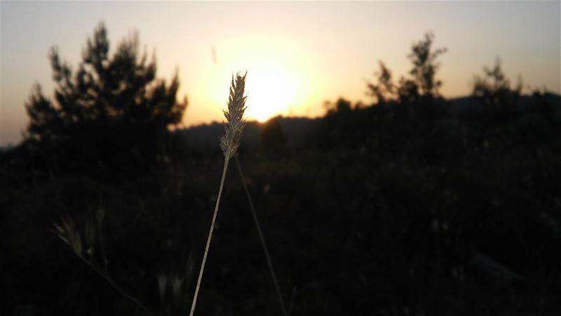 🌾 nature fornaya lebanon chouf botmeh focus environnement ... (Botme - Chouf)