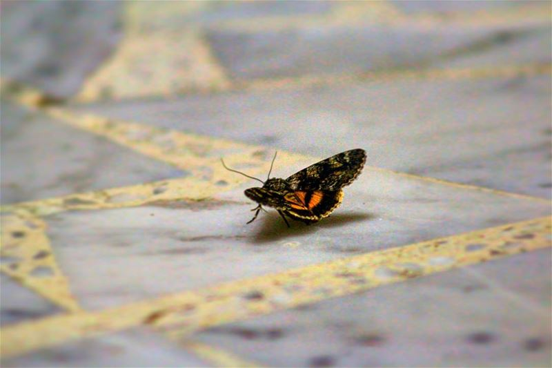 We've got some visitor's!! 🦋 sergesarkisphotography photography canon ... (El Kfour, Mont-Liban, Lebanon)