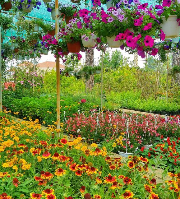 Flowers everywhere 😍💐🍁🌸🌷 lebanon nature naturelovers natureporn ... (Hammana)