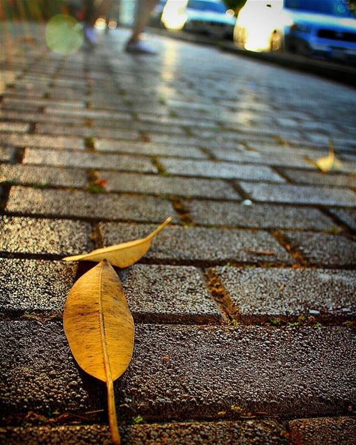 🍂🍂 sergesarkisphotography photography canon canonphotography ... (ATCL)