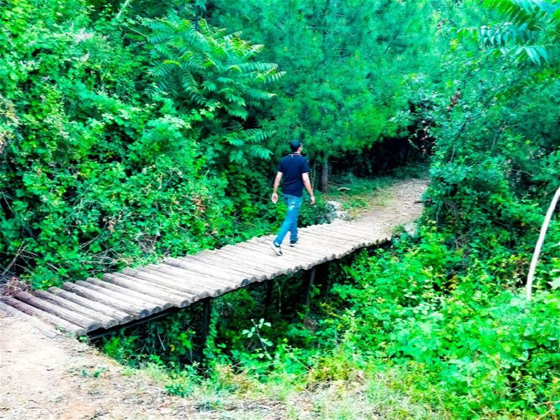 And into the forest I go, to lose my mind and find my soul. bridge... (Haret Sakhr, Mont-Liban, Lebanon)