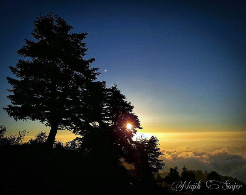 qamouaa sunset fog woods clouds akkar hiking hikingadventures ... (`Akkar, Liban-Nord, Lebanon)