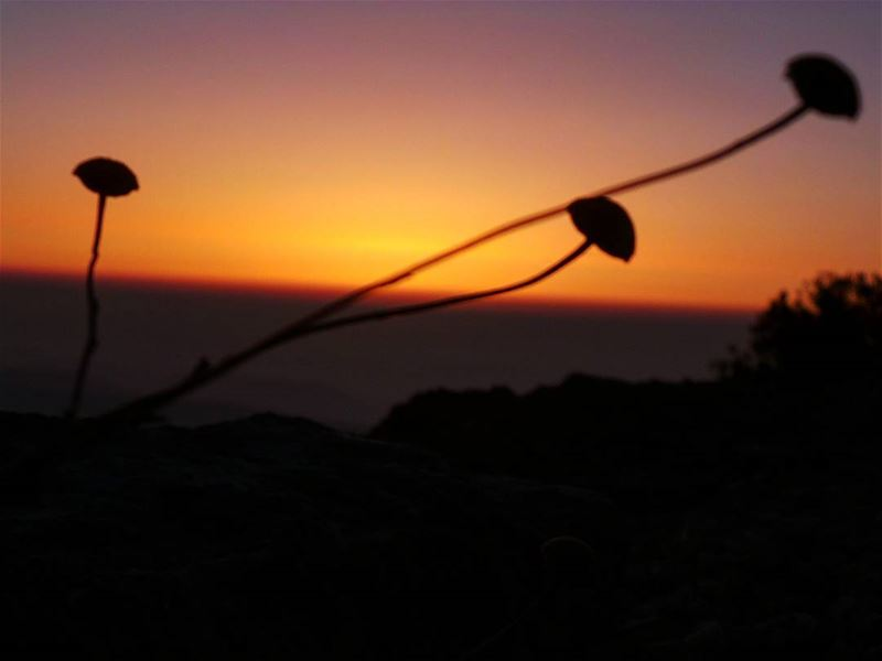 Every day brings new choices. nikontop_ nikonworld bns_sky bns_sunset ... (Shouf Biosphere Reserve)