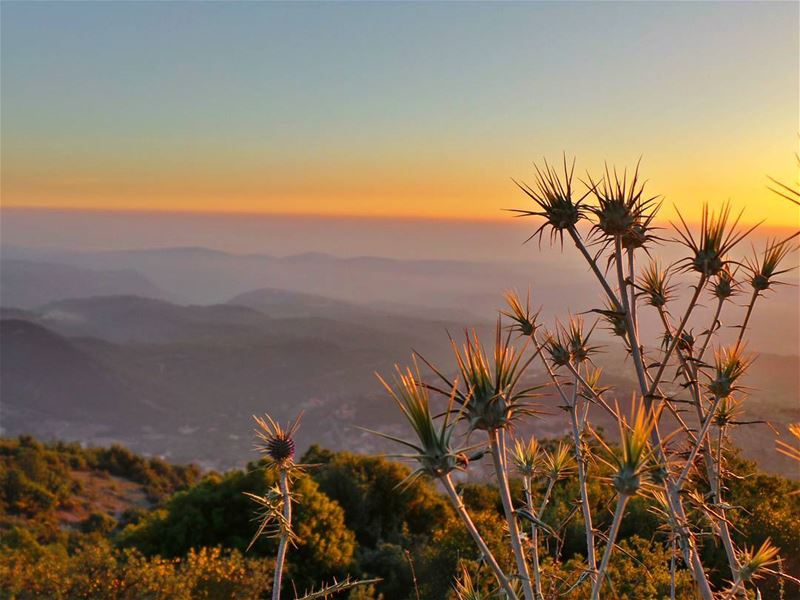 nikontop_ nikonworld bns_sky bns_sunset naturelovers unlimitedsunset... (Shouf Biosphere Reserve)