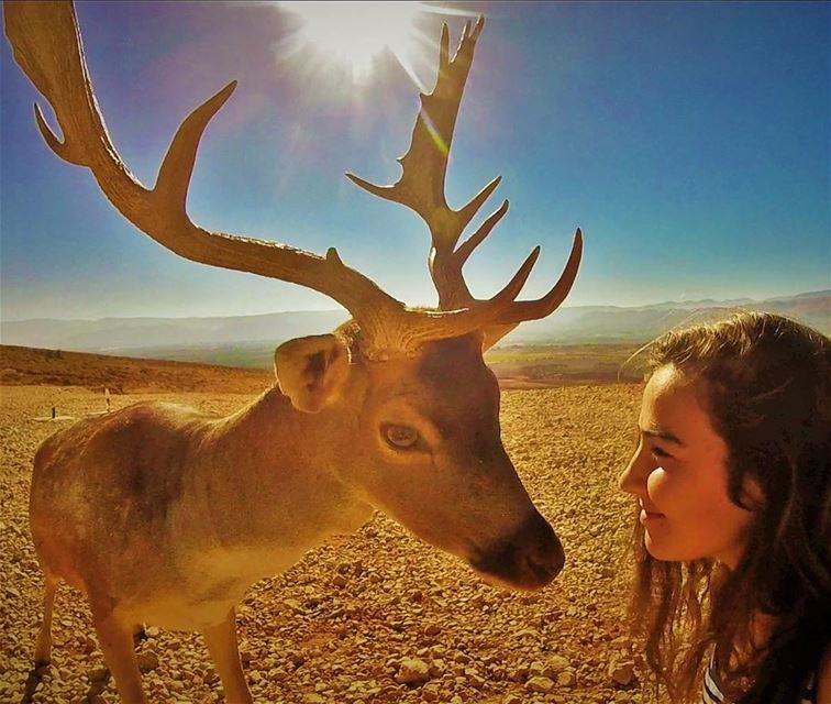 A soul is the only privilege that we share 🦌 Deer Lebanon Gopro ... (Aâna, Béqaa, Lebanon)